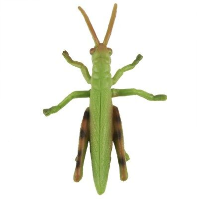 Happyyami 1 Set// 4pcs Insect Figurines Life Cycle of Grasshopper Realistic Insects Figures Toys Kids Cognitive Educational Toy Fake Bug Toys