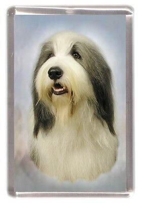 Bearded Collie Fridge Magnet Design No 2 by Starprint