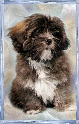 Lhasa Apso A6 Dog Notelets By Starprint