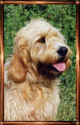 Otterhound A6 Notelets/Blank Cards No 1 By Starprint - Auto combined postage