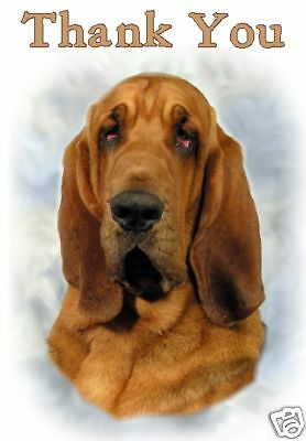 Bloodhound Thank You Card By Starprint