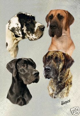 Great Dane A6 Blank Card No 6 By Starprint