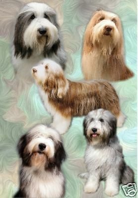 Bearded Collie A6 Blank Card No 1 Design By Starprint