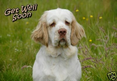 Clumber Spaniel Get Well Soon Card by Starprint - No 1