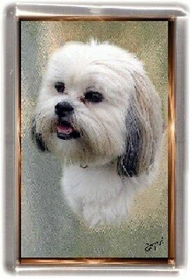 Lhasa Apso Fridge Magnet No 4 by Starprint