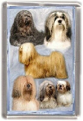 Lhasa Apso Fridge Magnet No 6 by Starprint