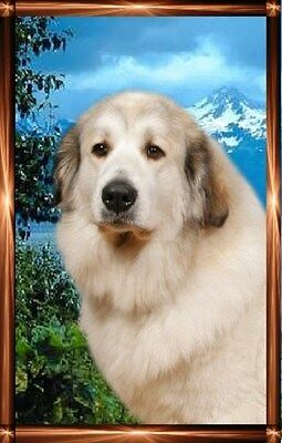 Pyrenean Mountain Dog Notelets/Blank Cards 1  Starprint