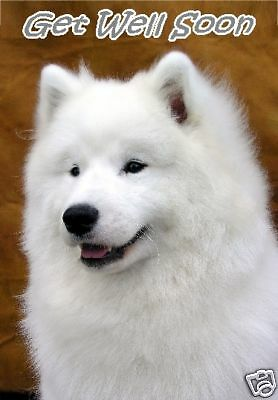 Samoyed Get Well Soon Card By Starprint - No 1