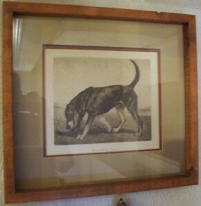 England Champion Chatley Blazer BLOODHOUND DOG ART 1905 Framed