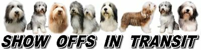BEARDED COLLIE Show Off Dog Car Sticker By Starprint
