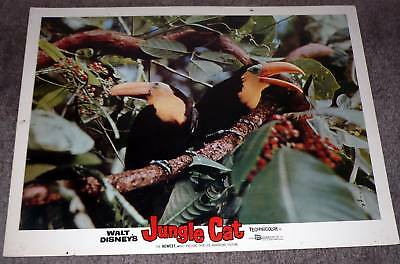 TOUCAN BIRDS original 1960 Disney lobby card 11x14 movie poster JUNGLE CAT