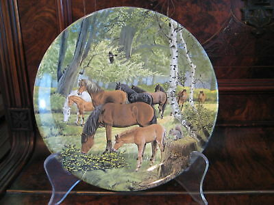 New Forest Ponies – 6th plate Britain's Wild Ponies