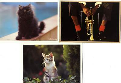 30 Cpm Chat Musique Photographe   Frederic Rolland