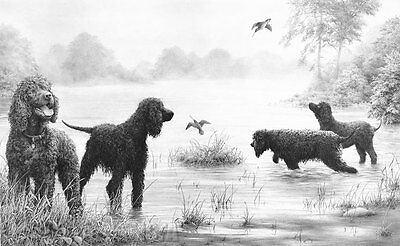 Mike Sibley CONNEMARA ENCOUNTER - Irish Water Spaniels Art Prints Gun Dogs