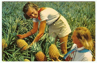 HAWAII Ladies Harvest Pineapples From Field VINTAGE 1950's Color Photo Postcard