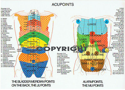 Acupoints Chart ..... A4 ....... New