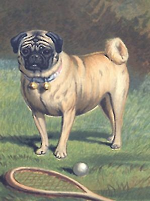 VINTAGE PUG~counted cross stitch pattern #1836~Animals Dogs Chart