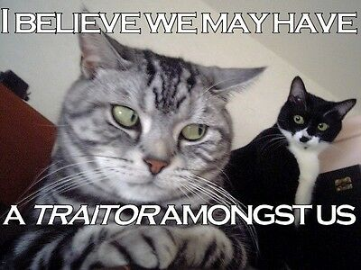Funny  Cat Traitor  Refrigerator / Tool Box / File Cabinet Magnet
