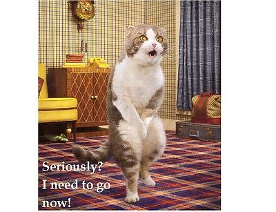 Funny Cat Needs To Go Now!   Refrigerator / Tool Box / File Cabinet Magnet