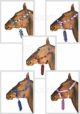 SUPER VALUE Two-Tone Headcollar and Leadrope Set ALL SIZES & 5 COLOURS!!