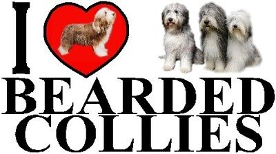 I LOVE BEARDED COLLIES Car Sticker By Starprint - Featuring the Bearded Collie