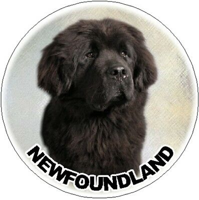 NEWFOUNDLAND OFFICIAL TAXI SERVICE  Dog Car Sticker  By Starprint