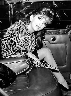 Photo Gina Lollobrigida  - 11X15 Cm  # 1