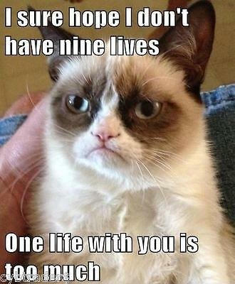 Funny Grumpy Cat I Sure Hope I Don't Have Nine Lives Refrigerator Magnet
