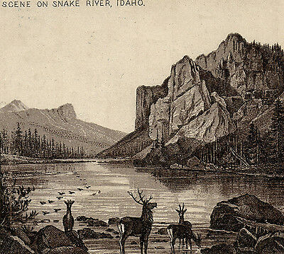 1890s Deer Scene on Snake River Idaho photo-style Spice Jersey Coffee TRADE CARD