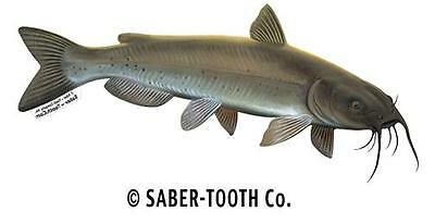 "CHANNEL CATFISH med right facing fish decal 14"" x 6.5"""
