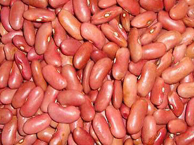 Kidney Bean Seed: Light Red Kidney Bean Seeds  Fresh Seed  FREE Shipping