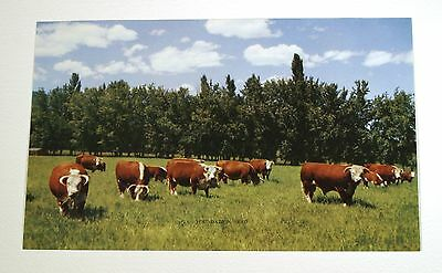 VTG 1950s CALENDAR ART LITHOGRAPH PRINT COWS ON FARM FOUNDATION HERD