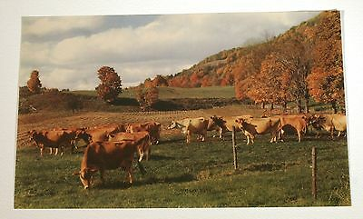 VTG 1950s CALENDAR ART LITHOGRAPH PRINT COWS ON FARM LAZY DAYS