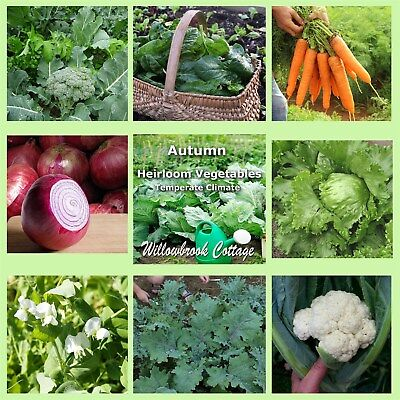 seeds AUTUMN vegetable TEMPERATE CLIMATE 15 packets value bulk pack HEIRLOOM