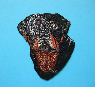 Iron-On Embroidered Patch - Rottweiler Head #3 - Dog