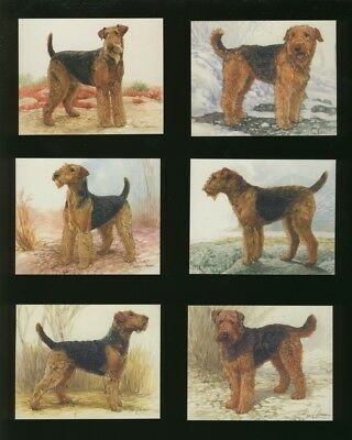 Set Of Of Airedale Terrier Dog Cards