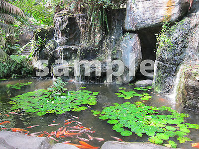 1 Beautiful Goldfish Fish Pond Digital Photo Image Penny Auction for Design