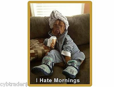 Funny Mastiff Dog Hate Mornings  Refrigerator / Tool  Box  Magnet Man Cave