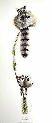 "WARWICK HIGGS ""Piggyback"" RACCOON baby BROWSE OUR SHOP! SIZE:70cm x 30cm  RARE"