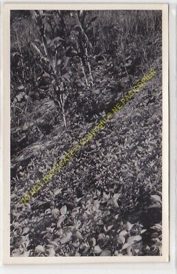 RPPC carte photo MADAGASCAR  culture n1