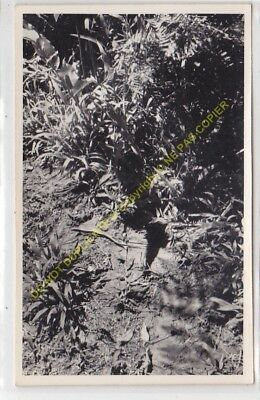 RPPC carte photo MADAGASCAR  n8