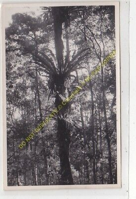 RPPC carte photo MADAGASCAR n44