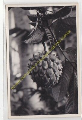 RPPC carte photo MADAGASCAR n46