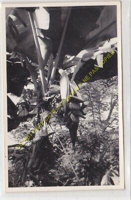 RPPC carte photo MADAGASCAR n51