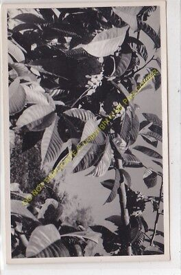RPPC carte photo MADAGASCAR n56
