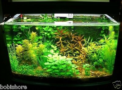 Free Post Australia Mixed Aquarium Seeds Fish Tank Pond Plant Seed