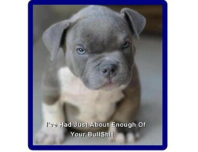Funny Mad Pit Bull Terrier Puppy Refrigerator / Tool Box / Filing Cabinet Magnet