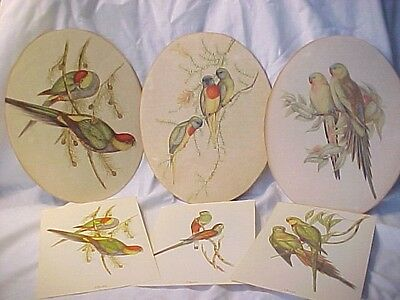 SMALL 6PC LOT VINTAGE PPR ARTWORK BIRDS PARAKEETS BUDGIES LOVE BIRDS ? TROPICAL