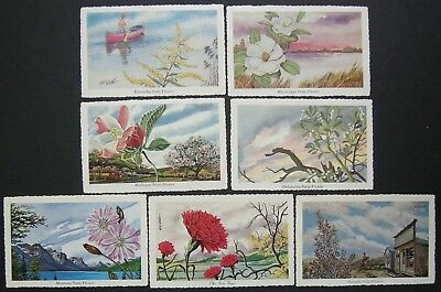 Usa Early 1970's?  Thirteen State Flower Postcards Unused Capital Publishers
