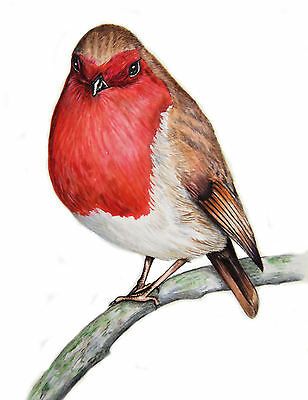 """""""ROBIN"""" A4 SIGNED PRINT From Original Watercolour Painting By Maria Moss"""